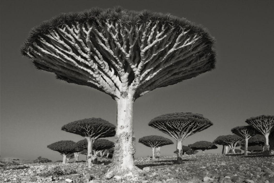 arbre novembre - anne lauricella - poésie - beth moon